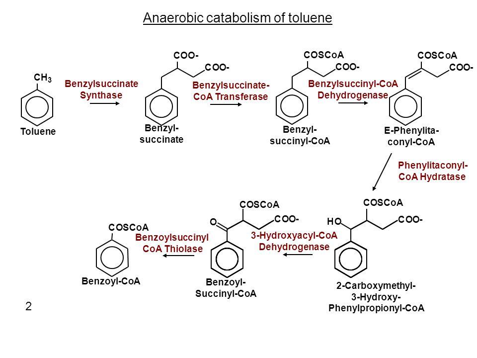 Anaerobic catabolism of toluene CO- COSCoA COO- COSCoA COO- CH 3 Toluene COO- O Benzyl- succinate Benzyl- succinyl-CoA E-Phenylita- conyl-CoA 2-Carbox