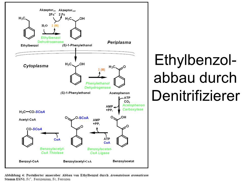 Ethylbenzol- abbau durch Denitrifizierer