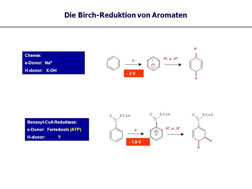 Die Birch-Reduktion von Aromaten Chemie: e-Donor: Na 0 H-donor: X-OH. - e - H +, e -, H + - 3 V H H C SCoAO AO C SCo -. e - C SCoAO H H Benzoyl-CoA Re
