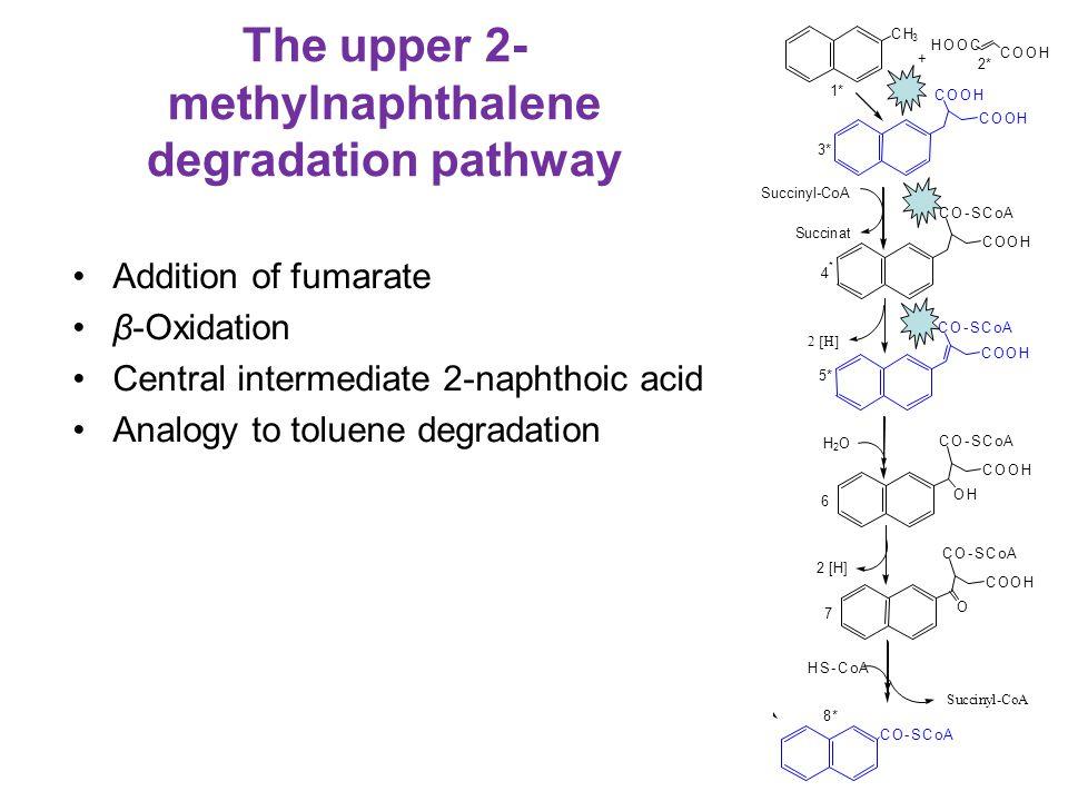 The upper 2- methylnaphthalene degradation pathway Addition of fumarate β-Oxidation Central intermediate 2-naphthoic acid Analogy to toluene degradati