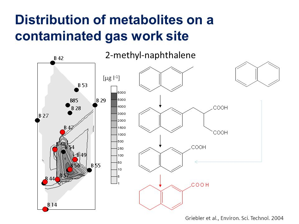 2-methyl-naphthalene COOH [µg l -1 ] Griebler et al., Environ. Sci. Technol. 2004 Distribution of metabolites on a contaminated gas work site