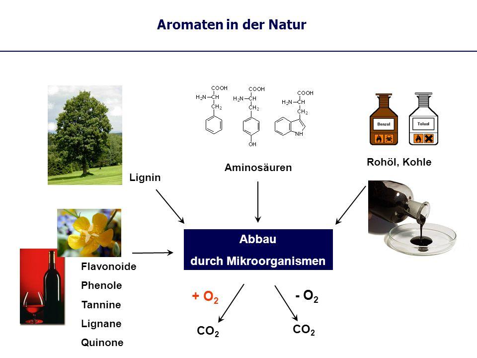 Flavonoide Phenole Tannine Lignane Quinone Abbau durch Mikroorganismen + O 2 - O 2 CO 2 Lignin Aromaten in der Natur Rohöl, Kohle Aminosäuren