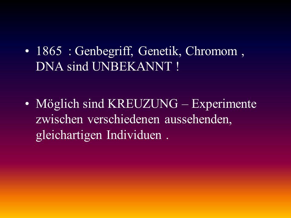 1865 : Genbegriff, Genetik, Chromom, DNA sind UNBEKANNT ! Möglich sind KREUZUNG – Experimente zwischen verschiedenen aussehenden, gleichartigen Indivi