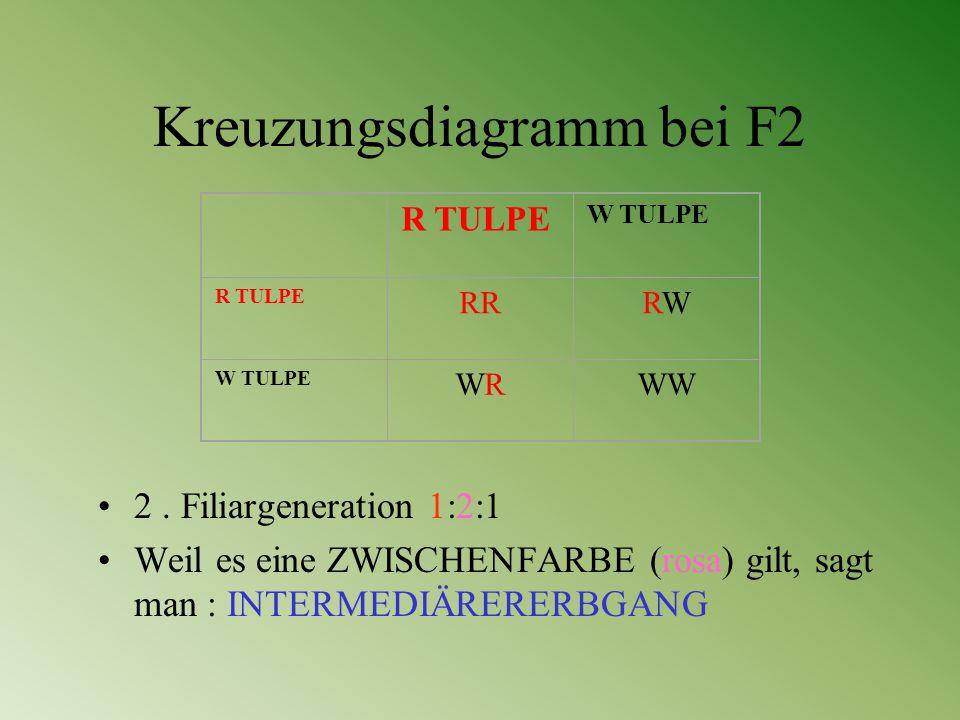 Kreuzungsdiagramm bei F2 2. Filiargeneration 1:2:1 Weil es eine ZWISCHENFARBE (rosa) gilt, sagt man : INTERMEDIÄRERERBGANG R TULPE W TULPE R TULPE RRR