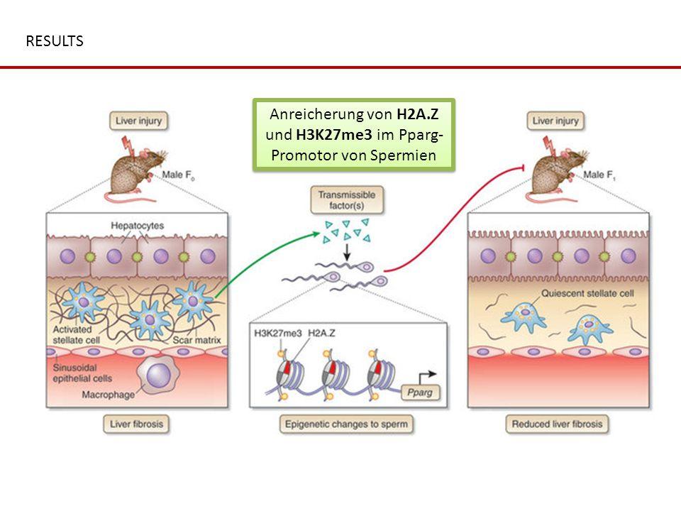 RESULTS Anreicherung von H2A.Z und H3K27me3 im Pparg- Promotor von Spermien