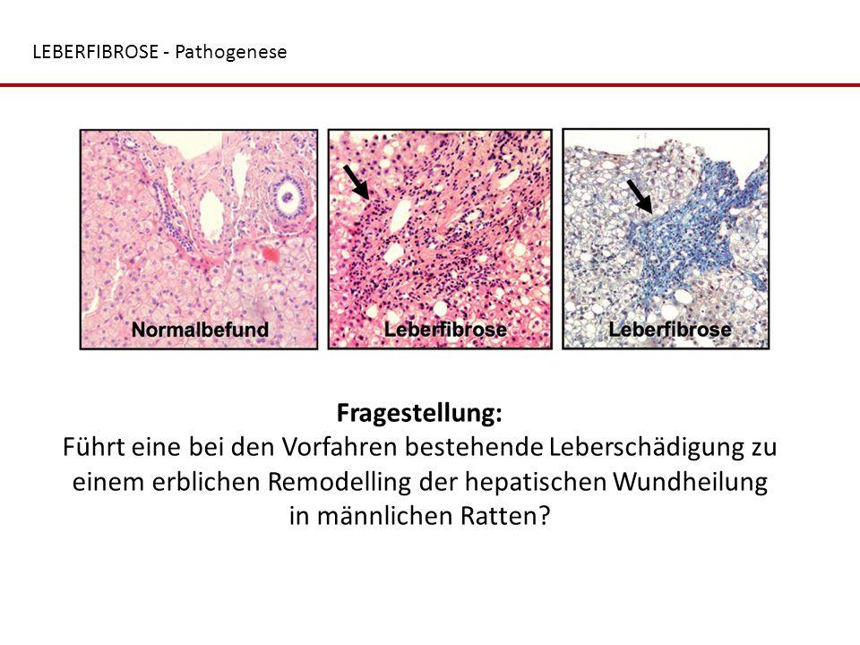 LEBERFIBROSE - Pathogenese Fragestellung: Führt eine bei den Vorfahren bestehende Leberschädigung zu einem erblichen Remodelling der hepatischen Wundh