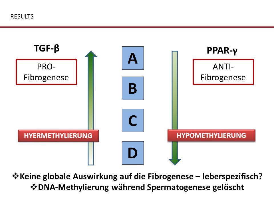 RESULTS TGF-β A B C D PPAR-γ PRO- Fibrogenese ANTI- Fibrogenese  Keine globale Auswirkung auf die Fibrogenese – leberspezifisch?  DNA-Methylierung w
