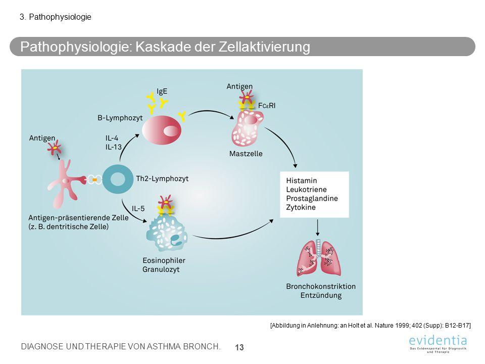 Pathophysiologie: Kaskade der Zellaktivierung 3. Pathophysiologie DIAGNOSE UND THERAPIE VON ASTHMA BRONCH. 13 [Abbildung in Anlehnung: an Holt et al.