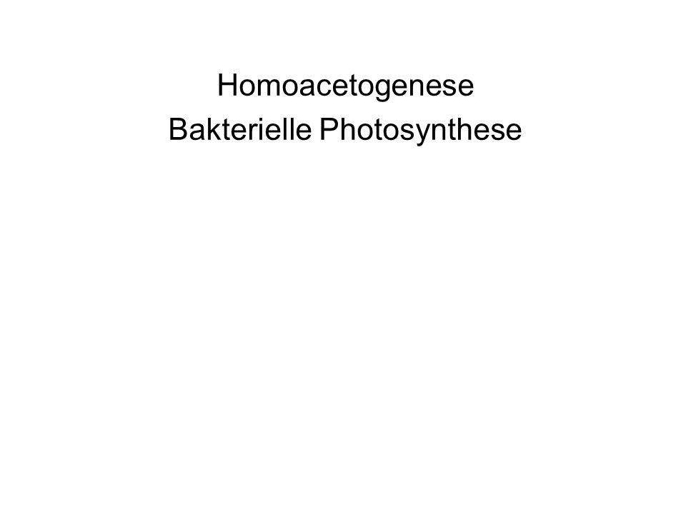 Homoacetogenese Bakterielle Photosynthese