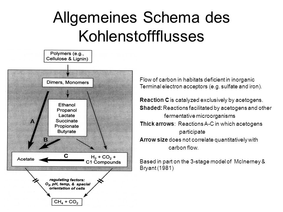 Allgemeines Schema des Kohlenstoffflusses Flow of carbon in habitats deficient in inorganic Terminal electron acceptors (e.g. sulfate and iron). React