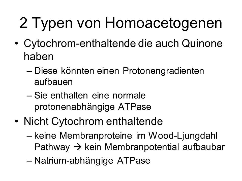 2 Typen von Homoacetogenen Cytochrom-enthaltende die auch Quinone haben –Diese könnten einen Protonengradienten aufbauen –Sie enthalten eine normale p