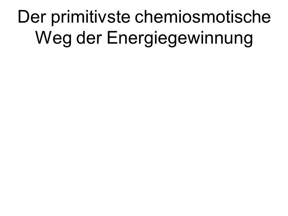 Der primitivste chemiosmotische Weg der Energiegewinnung