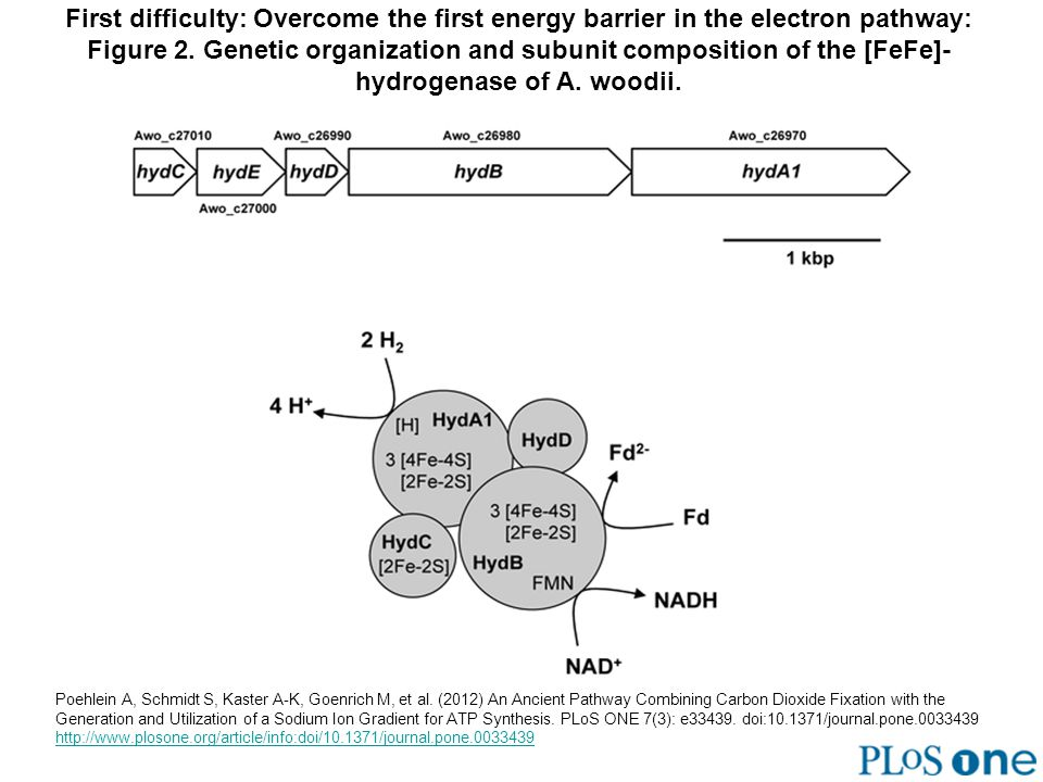 First difficulty: Overcome the first energy barrier in the electron pathway: Figure 2. Genetic organization and subunit composition of the [FeFe]- hyd