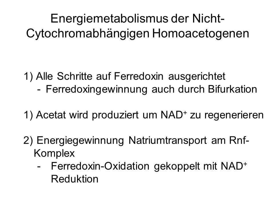 Energiemetabolismus der Nicht- Cytochromabhängigen Homoacetogenen 1) Alle Schritte auf Ferredoxin ausgerichtet -Ferredoxingewinnung auch durch Bifurka