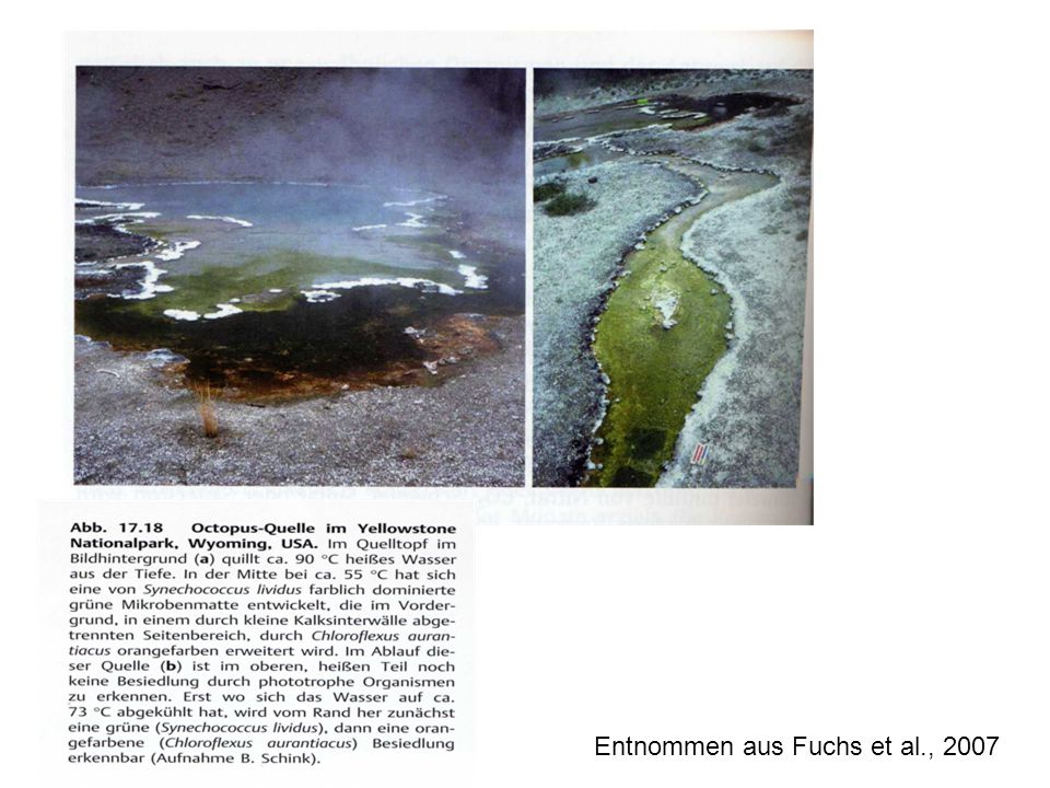 Entnommen aus Fuchs et al., 2007