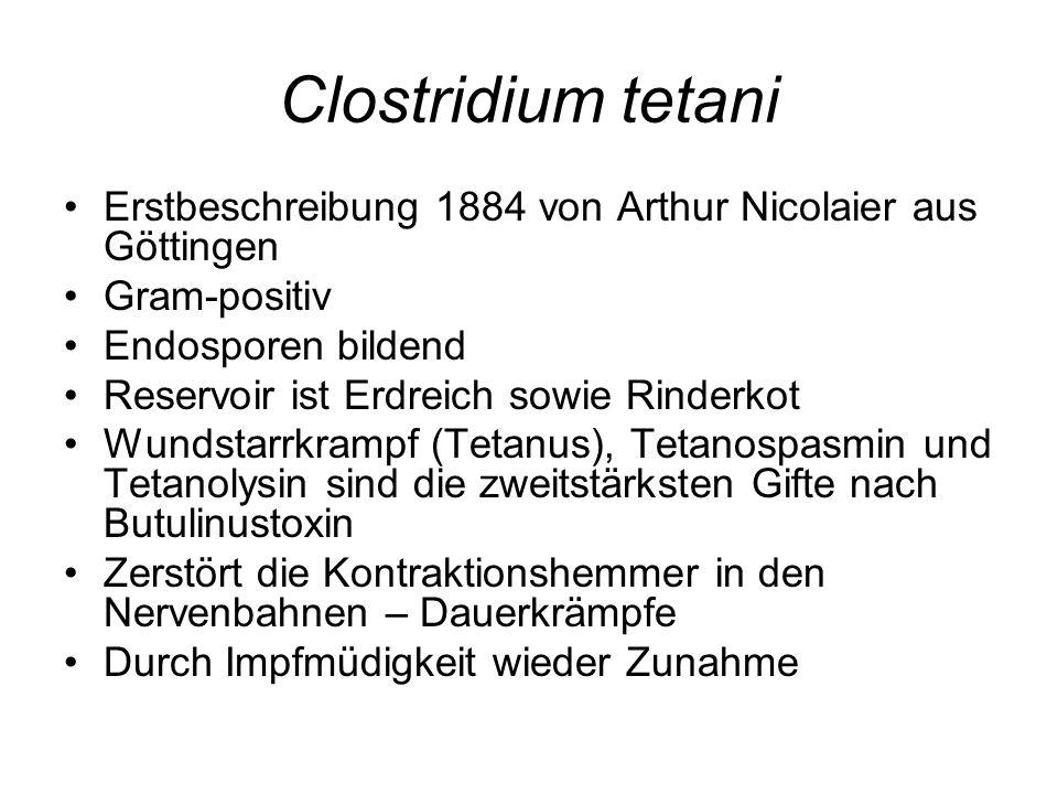 Clostridium tetani Erstbeschreibung 1884 von Arthur Nicolaier aus Göttingen Gram-positiv Endosporen bildend Reservoir ist Erdreich sowie Rinderkot Wun