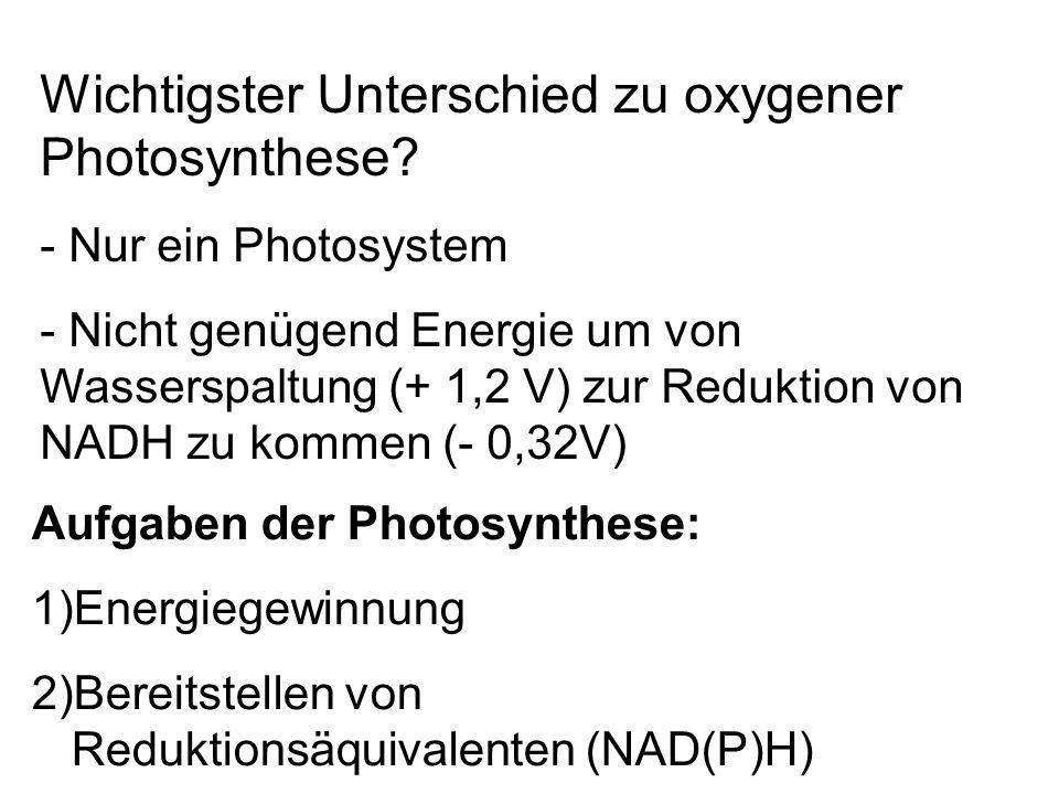 Wichtigster Unterschied zu oxygener Photosynthese? - Nur ein Photosystem - Nicht genügend Energie um von Wasserspaltung (+ 1,2 V) zur Reduktion von NA