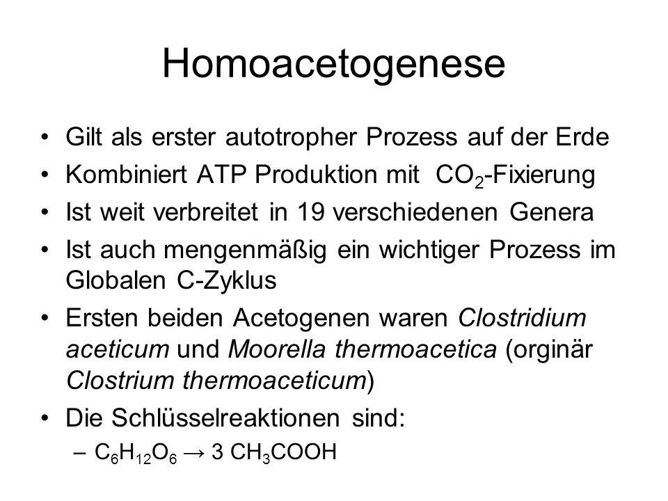 Homoacetogenese Gilt als erster autotropher Prozess auf der Erde Kombiniert ATP Produktion mit CO 2 -Fixierung Ist weit verbreitet in 19 verschiedenen