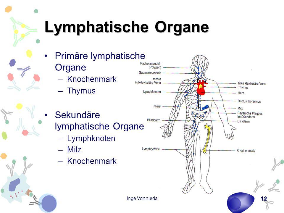 Inge Vonnieda 12 Lymphatische Organe Primäre lymphatische Organe –Knochenmark –Thymus Sekundäre lymphatische Organe –Lymphknoten –Milz –Knochenmark