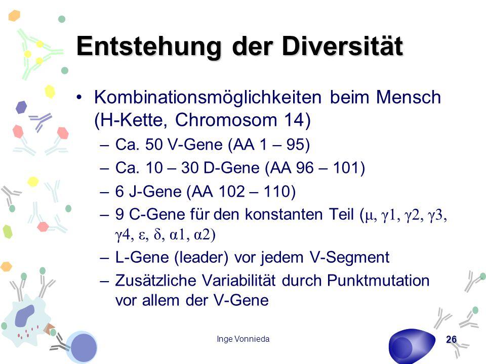 Inge Vonnieda 26 Entstehung der Diversität Kombinationsmöglichkeiten beim Mensch (H-Kette, Chromosom 14) –Ca. 50 V-Gene (AA 1 – 95) –Ca. 10 – 30 D-Gen