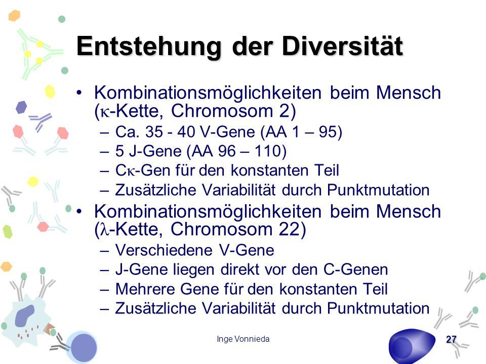 Inge Vonnieda 27 Entstehung der Diversität Kombinationsmöglichkeiten beim Mensch ( κ -Kette, Chromosom 2) –Ca. 35 - 40 V-Gene (AA 1 – 95) –5 J-Gene (A