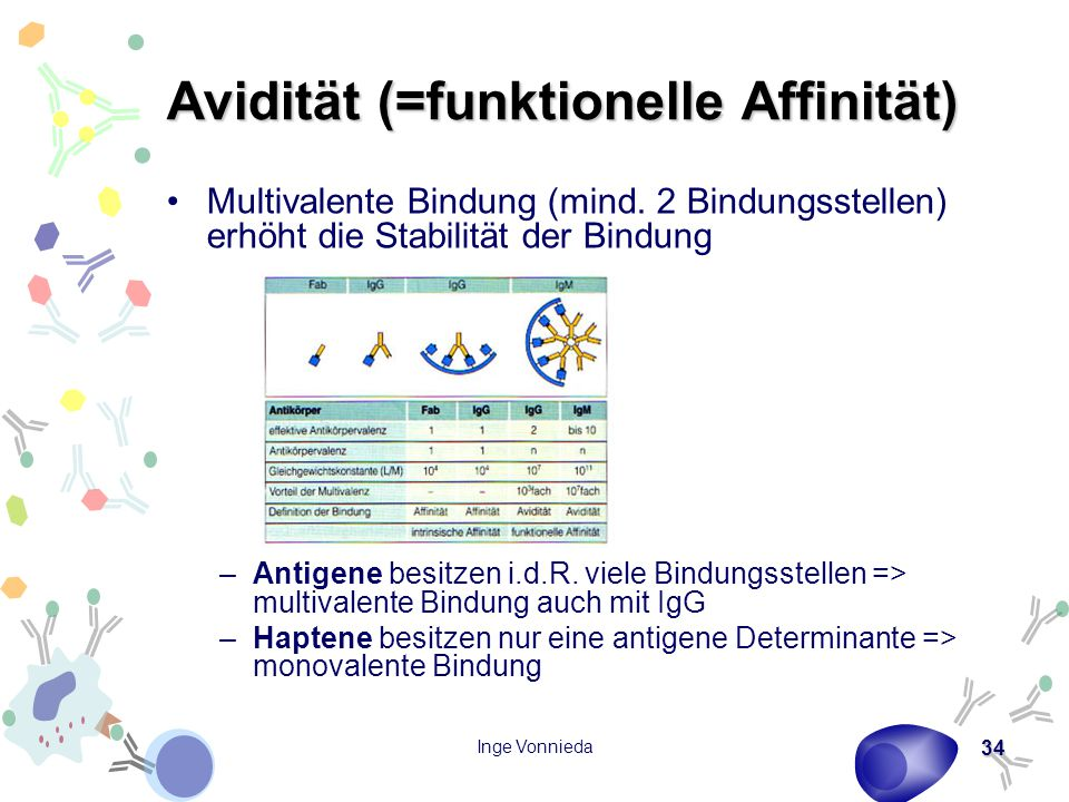 Inge Vonnieda 34 Avidität (=funktionelle Affinität) Multivalente Bindung (mind. 2 Bindungsstellen) erhöht die Stabilität der Bindung –Antigene besitze