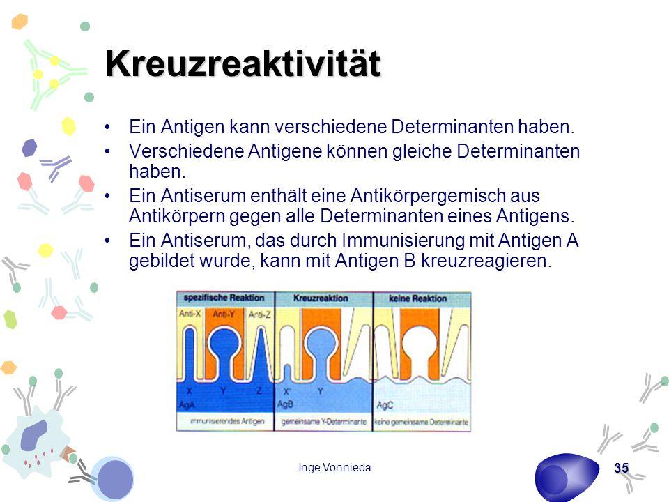 Inge Vonnieda 35 Kreuzreaktivität Ein Antigen kann verschiedene Determinanten haben. Verschiedene Antigene können gleiche Determinanten haben. Ein Ant