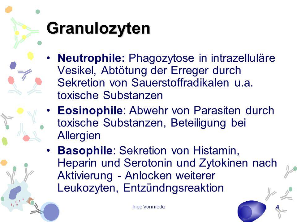 Inge Vonnieda 4 Granulozyten Neutrophile: Phagozytose in intrazelluläre Vesikel, Abtötung der Erreger durch Sekretion von Sauerstoffradikalen u.a. tox