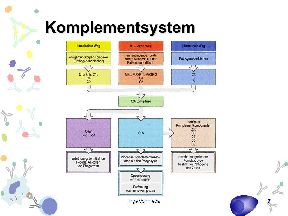 Inge Vonnieda 18 Struktur der Antikörper Schwere Ketten (Anzahl konstanter Domänen) –IgG: γ -Kette (3) –IgM: μ -Kette (4) –IgA: α -Kette (3) –IgE: ε -Kette (4) –IgD: δ -Kette (3) Leichte Ketten –κ-Kette –λ -Kette