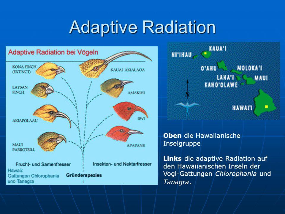 Adaptive Radiation Oben die Hawaiianische Inselgruppe Links die adaptive Radiation auf den Hawaiianischen Inseln der Vogl-Gattungen Chlorophania und T