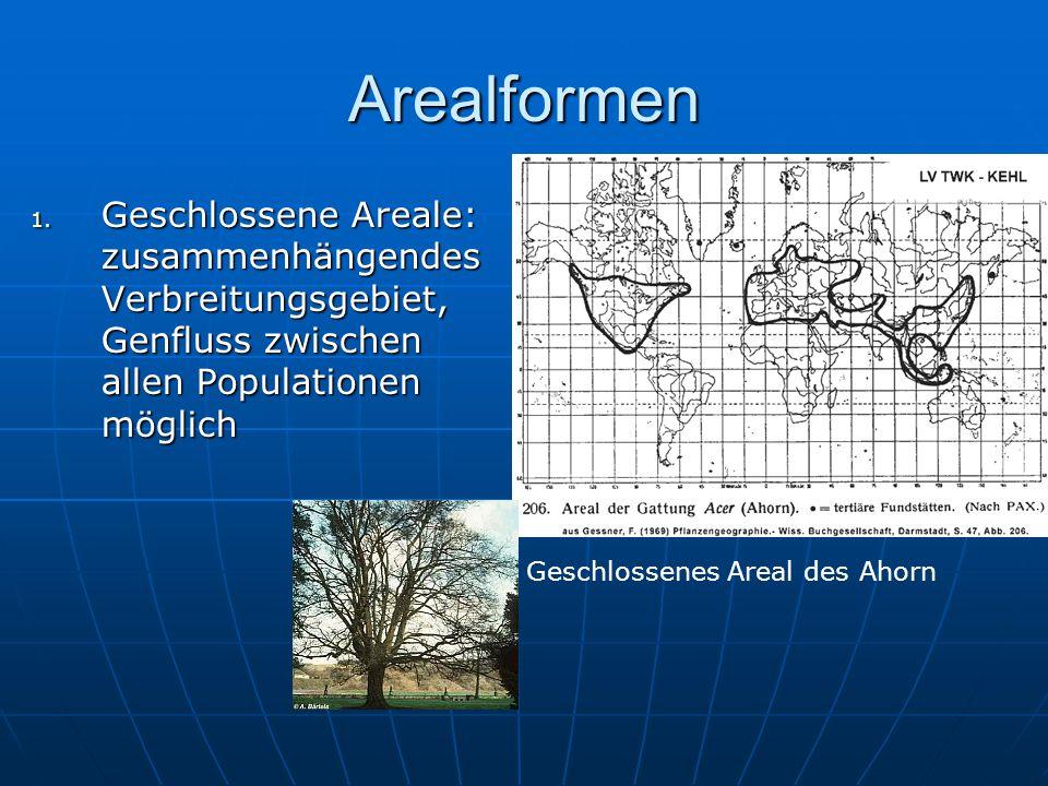 Arealformen 1. Geschlossene Areale: zusammenhängendes Verbreitungsgebiet, Genfluss zwischen allen Populationen möglich Geschlossenes Areal des Ahorn