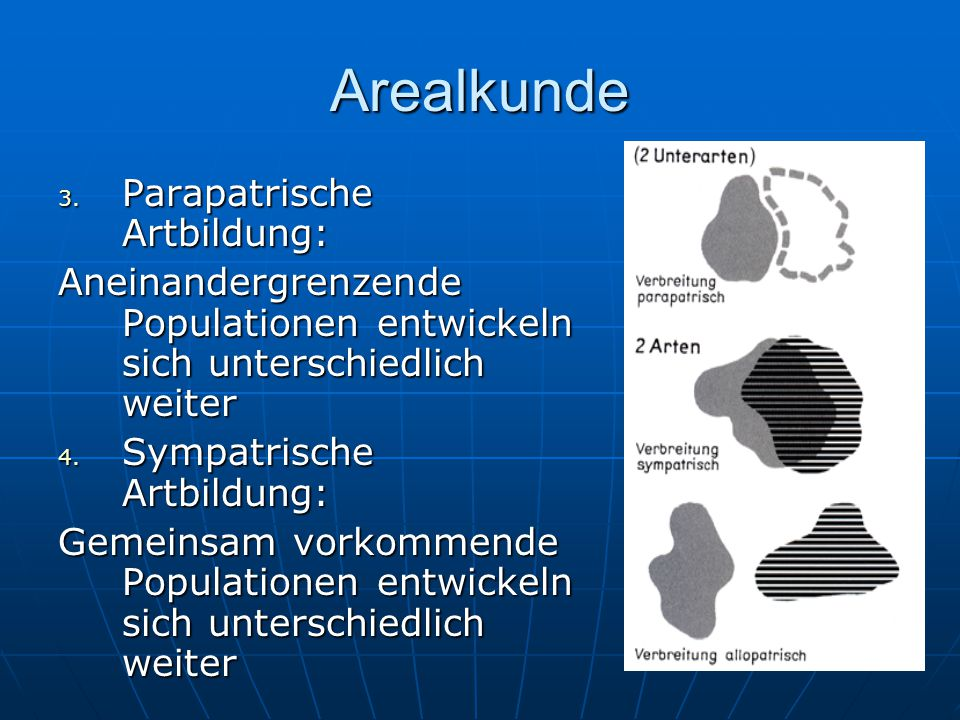 Arealkunde 3. Parapatrische Artbildung: Aneinandergrenzende Populationen entwickeln sich unterschiedlich weiter 4. Sympatrische Artbildung: Gemeinsam
