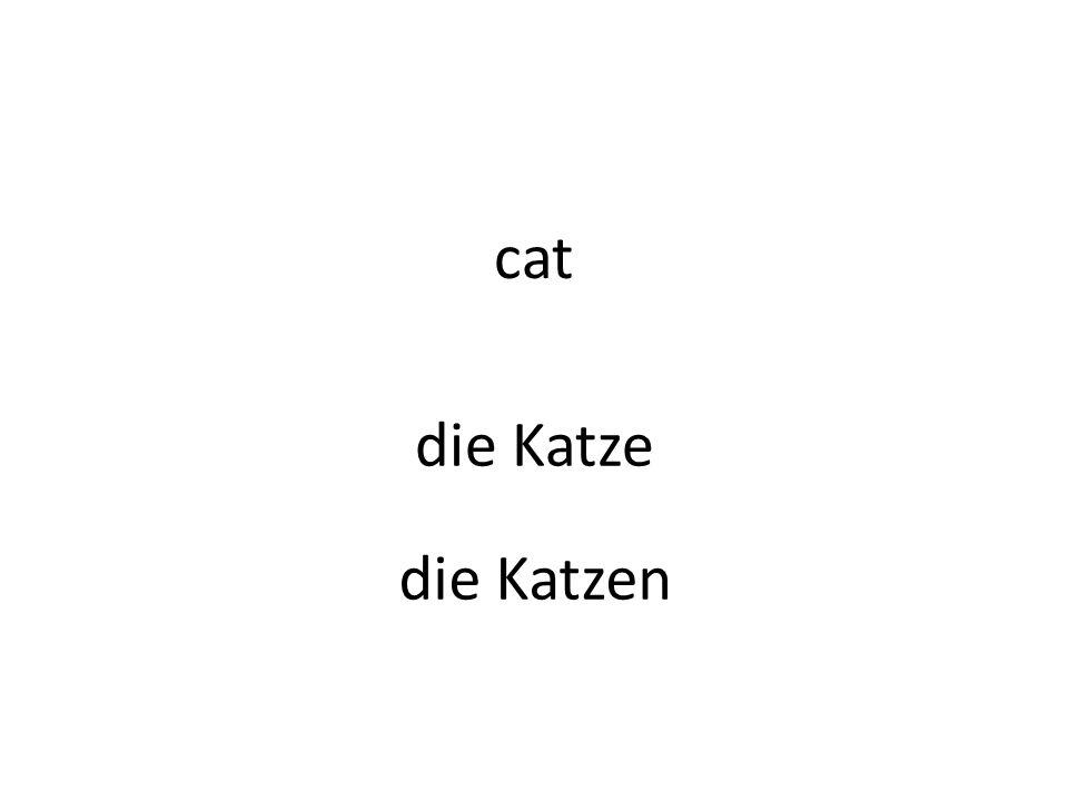 cat die Katze die Katzen