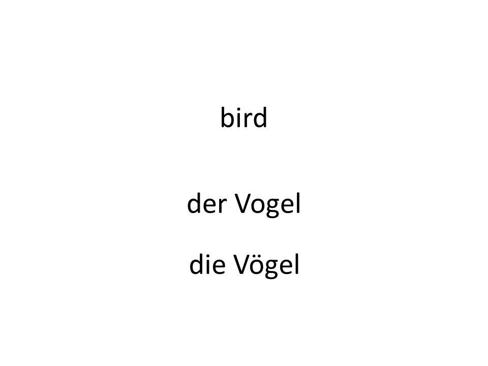 bird der Vogel die Vögel