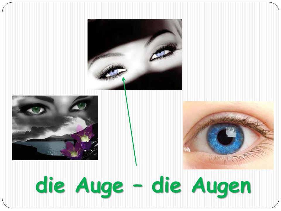 die Auge – die Augen