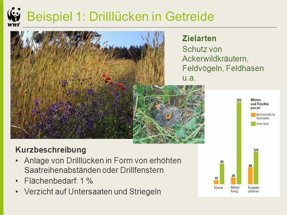 Beispiel 1: Drilllücken in Getreide Kurzbeschreibung Anlage von Drilllücken in Form von erhöhten Saatreihenabständen oder Drillfenstern Flächenbedarf: