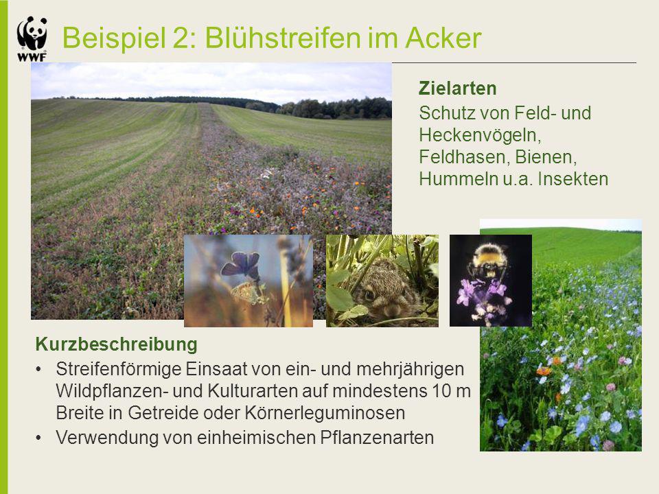 Beispiel 2: Blühstreifen im Acker Kurzbeschreibung Streifenförmige Einsaat von ein- und mehrjährigen Wildpflanzen- und Kulturarten auf mindestens 10 m