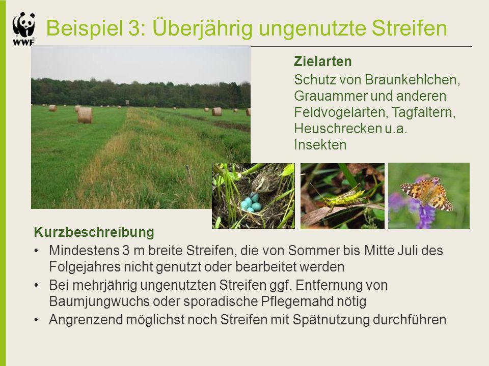 Beispiel 3: Überjährig ungenutzte Streifen Kurzbeschreibung Mindestens 3 m breite Streifen, die von Sommer bis Mitte Juli des Folgejahres nicht genutz