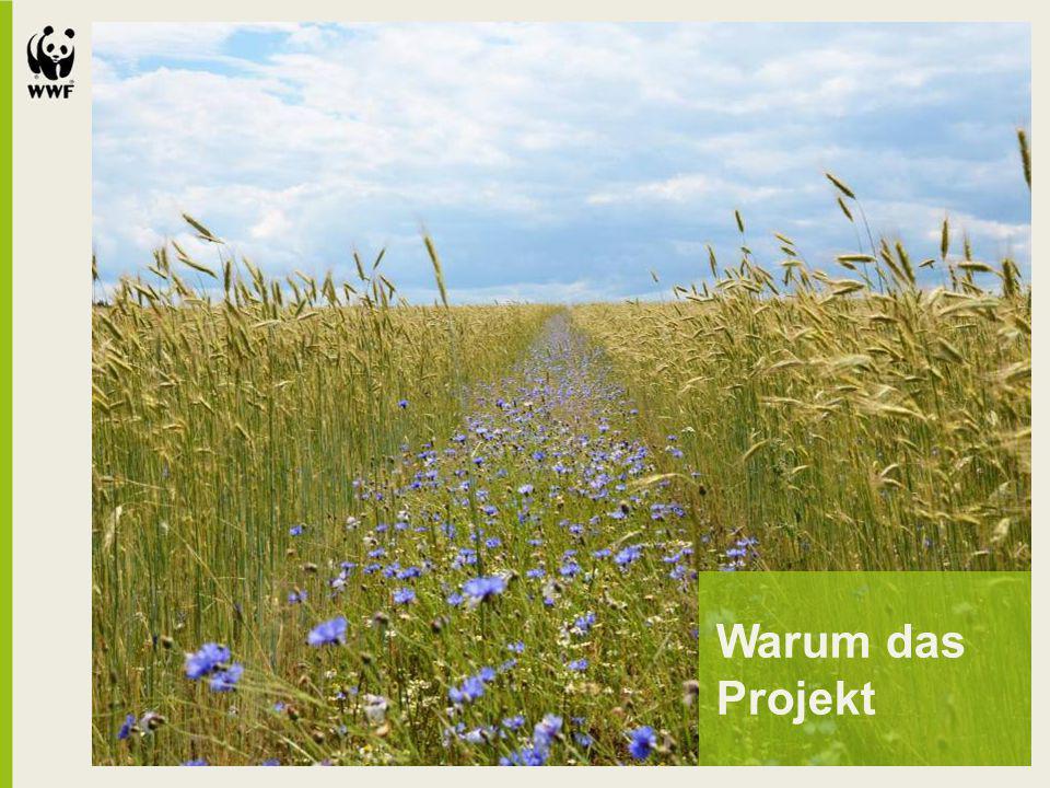 Leistungskatalog Grundlage des Naturschutzstandards: umfassender Maßnahmen- und Leistungskatalog bestehend aus derzeit 45 Hauptmodule (ca.