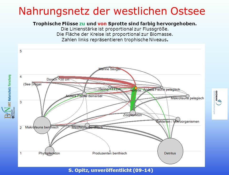 Nahrungsnetz der westlichen Ostsee S. Opitz, unveröffentlicht (09-14) Trophische Flüsse zu und von Sprotte sind farbig hervorgehoben. Die Linienstärke