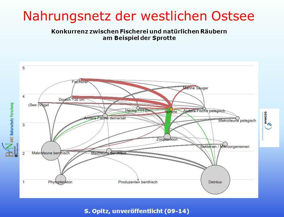 Nahrungsnetz der westlichen Ostsee S. Opitz, unveröffentlicht (09-14) Konkurrenz zwischen Fischerei und natürlichen Räubern am Beispiel der Sprotte