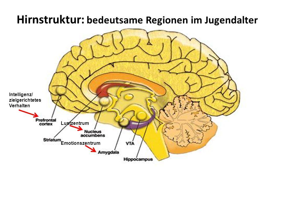 Hirnstruktur: bedeutsame Regionen im Jugendalter Intelligenz/ zielgerichtetes Verhalten Lustzentrum Emotionszentrum
