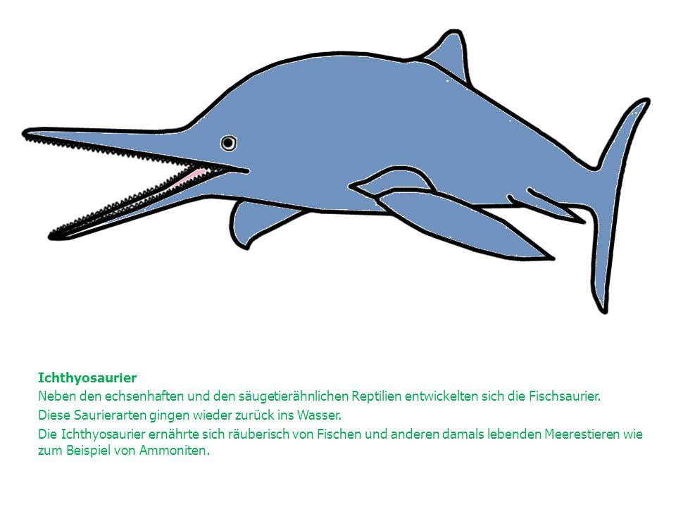 Ichthyosaurier Neben den echsenhaften und den säugetierähnlichen Reptilien entwickelten sich die Fischsaurier. Diese Saurierarten gingen wieder zurück