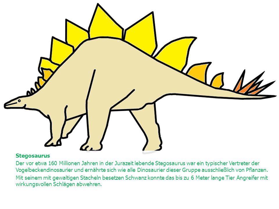 Stegosaurus Der vor etwa 160 Millionen Jahren in der Jurazeit lebende Stegosaurus war ein typischer Vertreter der Vogelbeckendinosaurier und ernährte