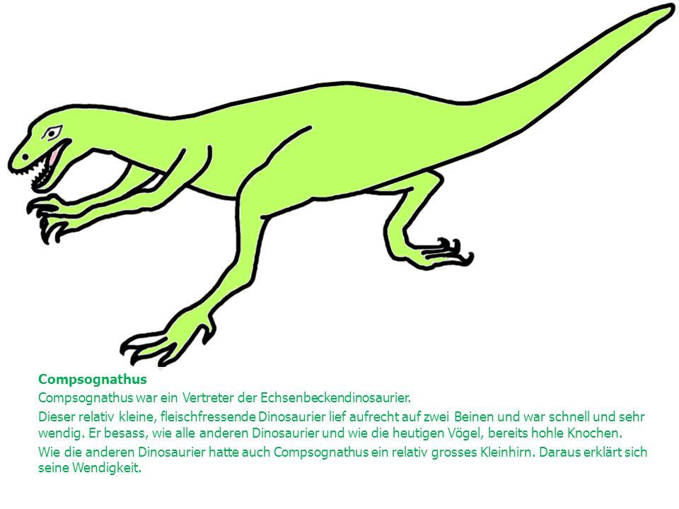 Compsognathus Compsognathus war ein Vertreter der Echsenbeckendinosaurier. Dieser relativ kleine, fleischfressende Dinosaurier lief aufrecht auf zwei