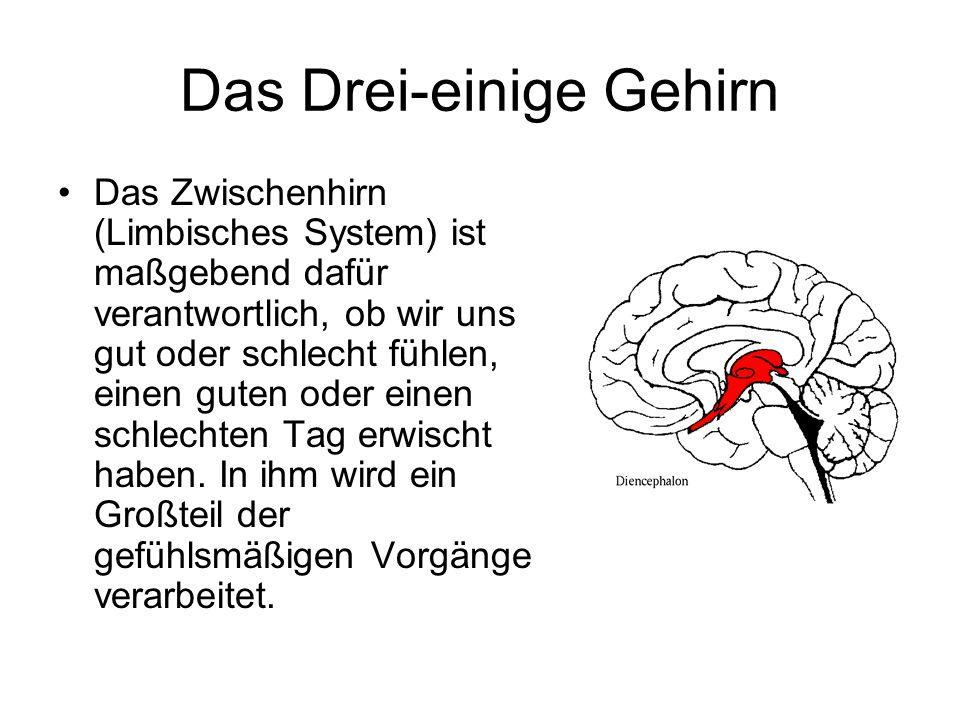 Das Drei-einige Gehirn Das Zwischenhirn (Limbisches System) ist maßgebend dafür verantwortlich, ob wir uns gut oder schlecht fühlen, einen guten oder