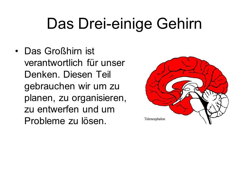 Das Drei-einige Gehirn Das Großhirn ist verantwortlich für unser Denken. Diesen Teil gebrauchen wir um zu planen, zu organisieren, zu entwerfen und um