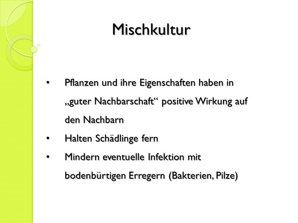 """Mischkultur Pflanzen und ihre Eigenschaften haben in """"guter Nachbarschaft"""" positive Wirkung auf den Nachbarn Pflanzen und ihre Eigenschaften haben in"""