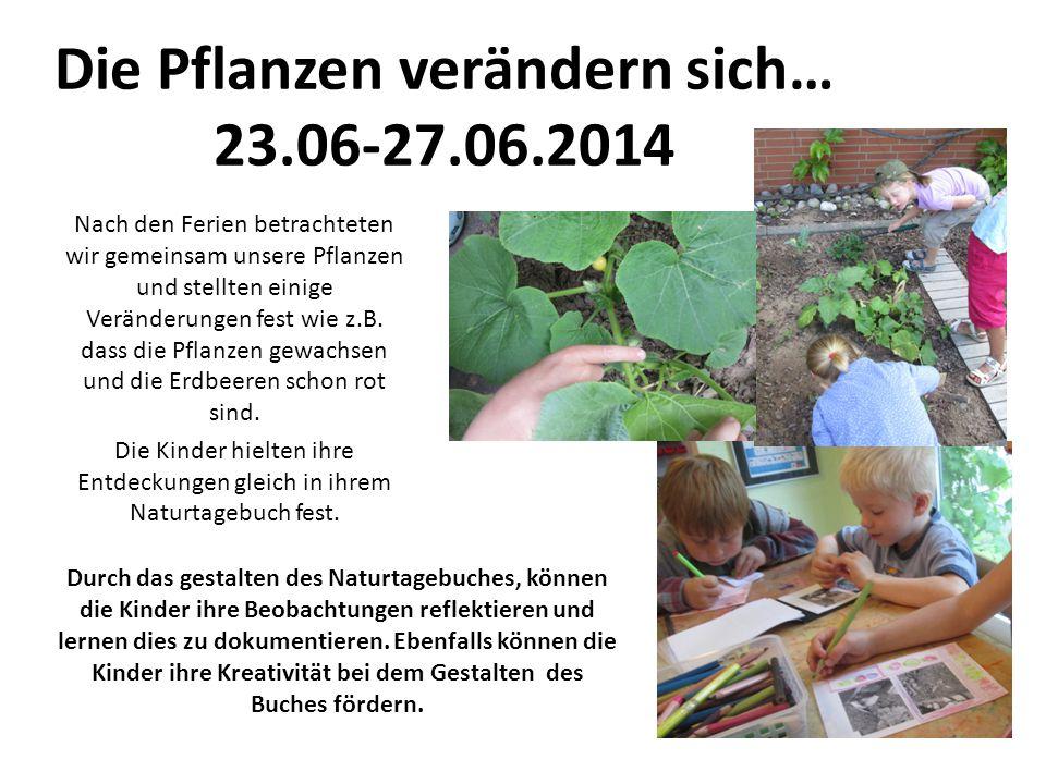 Die Pflanzen verändern sich… 23.06-27.06.2014 Nach den Ferien betrachteten wir gemeinsam unsere Pflanzen und stellten einige Veränderungen fest wie z.