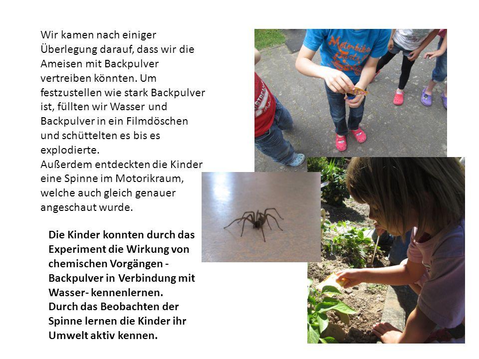 Wir kamen nach einiger Überlegung darauf, dass wir die Ameisen mit Backpulver vertreiben könnten. Um festzustellen wie stark Backpulver ist, füllten w